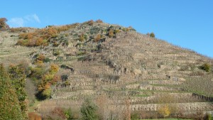 Plus de 70 lieux-dits emmaillent le terroir de cette appelation qui s'étend sur trois communes d'Ampuis, St Cyr-sur-Rhône et Tupin-Semons (© Pierre Nouvelle).