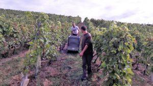 Une fois les raison en cuve, au bout de quatre à cinq semaines, le vigneron aura une idée plus précise sur la nature du millésime 2017 (© Pierre Nouvelle).
