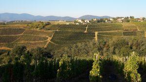 En ce premier jour d'automne, une vue sur les vignobles de Côte Rôtie depuis un des coteaux du hameau de rosier (© Pierre Nouvelle).