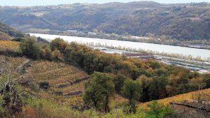 Sur les hauts des communes de Syssuel, chasse et Viernne, les vignes ont repris vie depuis une vingtaine d'années (© Pierre Nouvelle).