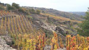 Pour le moment, entre Chasse et Vienne, la vigne occupe une qyuarantaine d'hectares et il reste au moins soixante à conquérir (© Pierre Nouvelle).